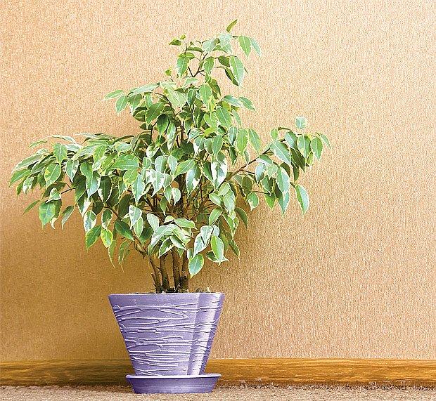 Pokojové rostliny vybíráme podle obytného prostoru.