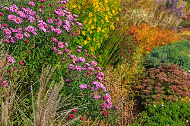 Trvalky kvetou i na podzim