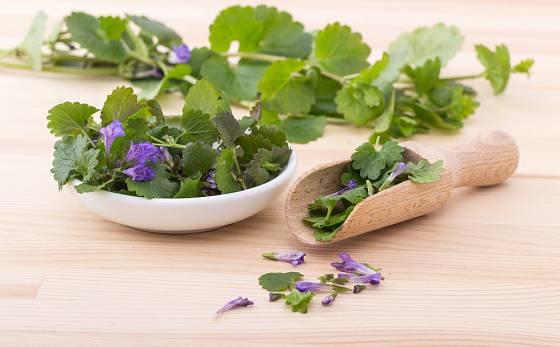Popenec obecný se používá jako léčivá rostlina, mladé rostliny se přidávají také do nádivek a salátů.