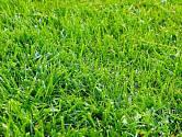 Základem každé zahrady je krásný a prospívající trávník.