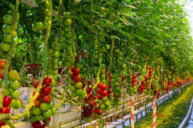 Do tohoto typu pěstování se nevrhejte po hlavě, ale nejdříve si trochu nastudujte potřebné informace