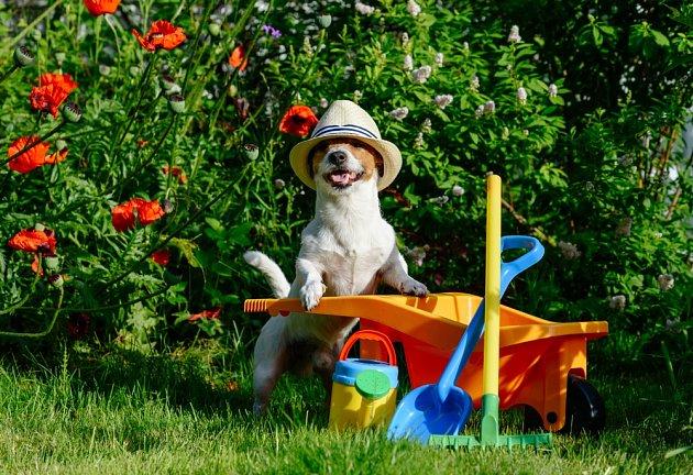 Někteří psi zahradničení doslova milují.