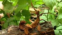 Strašilkám stačí listí