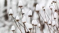 Sníh chrání i zdobí