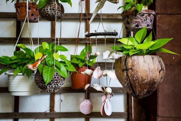 Kokos dělá radost v pokoji i venku na terase.