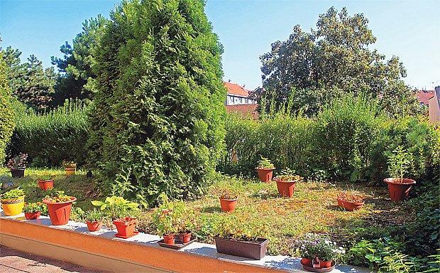 Stromy na terase