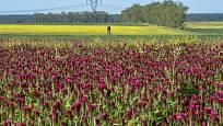 Červeně zbarvené pole na první pohled zaujme