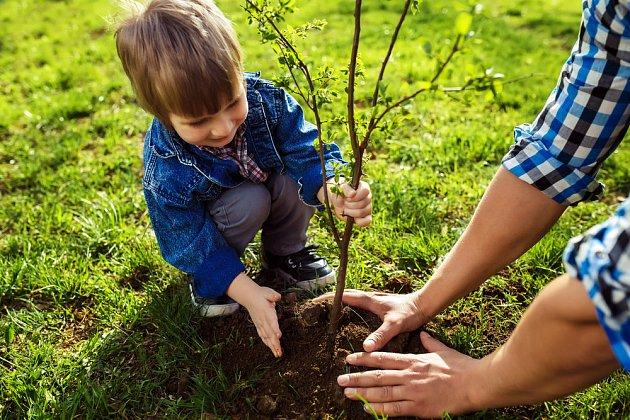 Do výsadby stromků, zelených kamarádů, můžete zapojit i děti