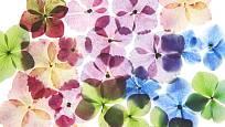 Obraz z květin vytváříme podle svých představ.