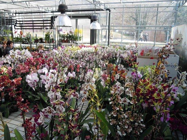 Nechybí ani bohatá nabídka rostlin k prodeji.