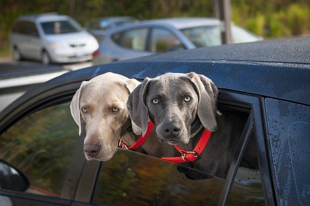NIKDY nenechávejte psa v autě - ani ve stínu či s otevřeným oknem