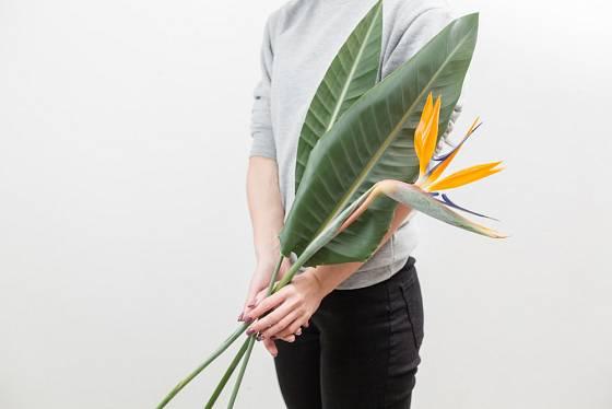 Strelície se využívá také jako řezaná květina.
