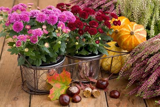 Ke chryzantémám a vřesům naaranžujte plody podzimu