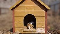 Různé psí rasy potřebují psí boudu odpovídající velikosti.