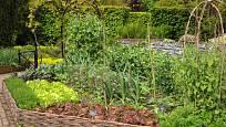 Zeleninová zahrádka může být úrodná i krásná