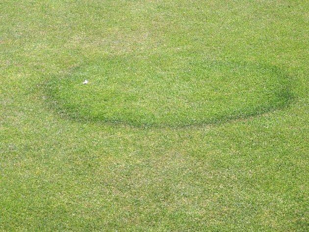 Přítomnost podhoubí v trávníku často prozrazuje sytější zbarvení rávy.
