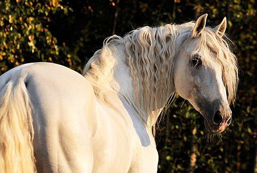 Koně na silnici i v přírodě