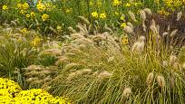 Vousatec spolu s pozdně kvetoucími trvalkami