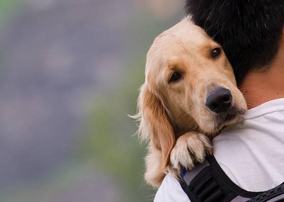 Pes nás bude milovat, když mu budeme věnovat svůj čas
