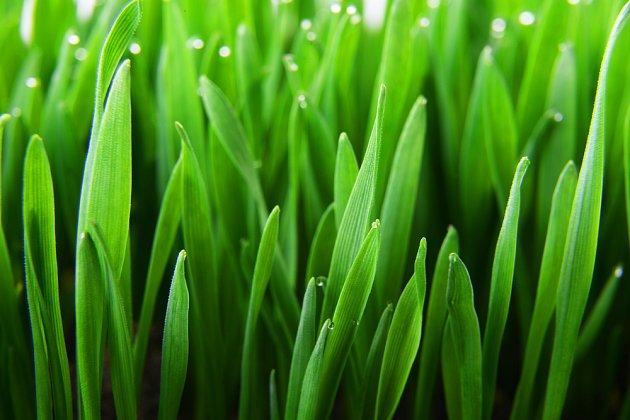 Živou zeleň nic nenahradí