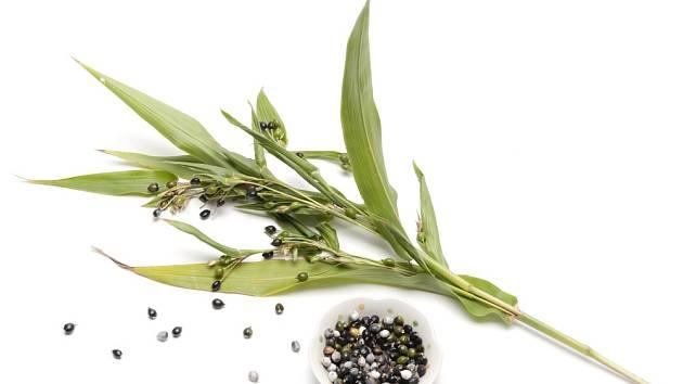 Slzovka má i mnoho léčivých schopností. Například detoxikuje organismus.