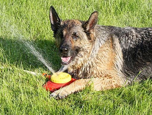 I psi ocení zavlažování