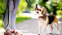 Vodítko vybíráme podle velikosti, stáří a povahy psa.
