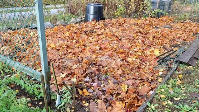 Listí je ideální mulč, kterého je na podzim dostatek
