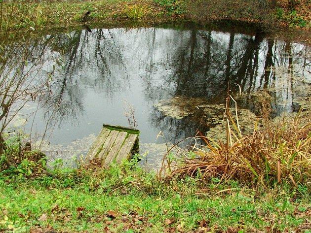 Suché stvoly vodních a bahenních rostlin na podzim nestříháme