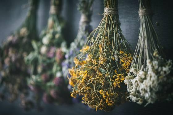 Léčivé byliny sušíme na tmavém, vzdušném místě