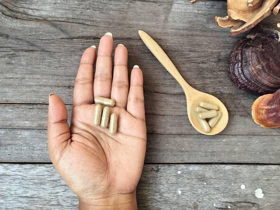 Lesklokorka je léčivá houba