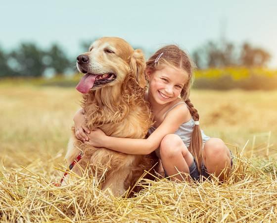 Zlatí retrívři se těší v rodinách s dětmi velké oblibě.