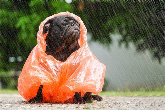 Bojí se bouřky?