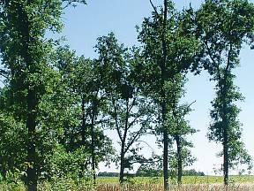 střední les
