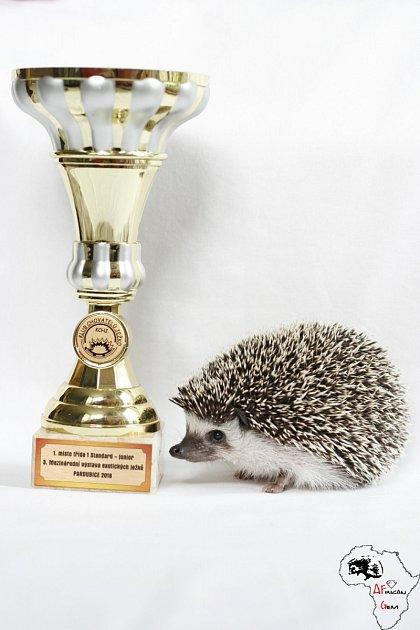 ježčí šampion