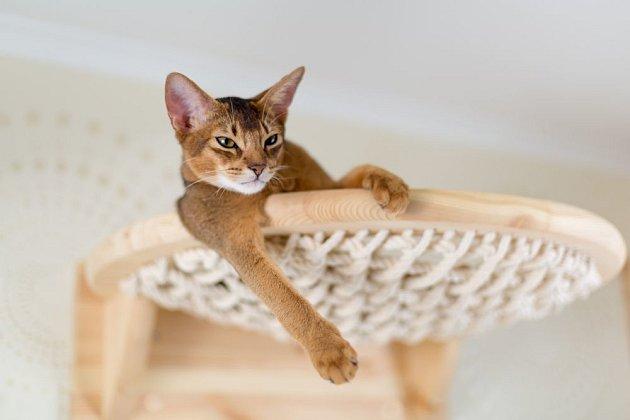 Pelíšek pro kočku může mít podobu síťky ve výšce