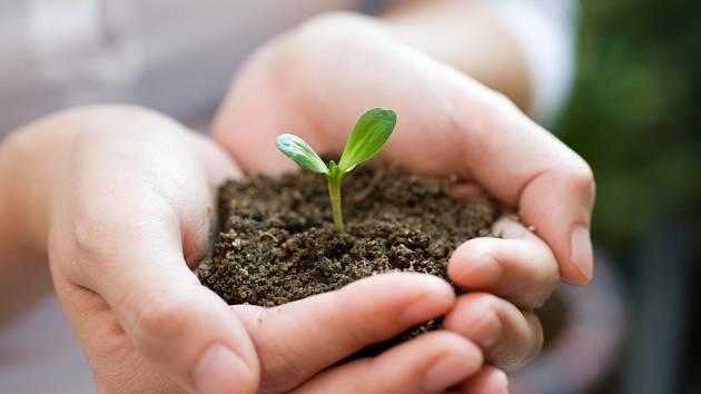 Zahradničení ve třetím únorovém týdnu: letničky ze semen, péče o sad…