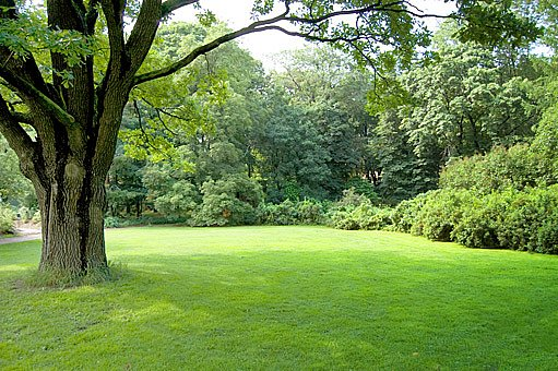 okrasný trávník
