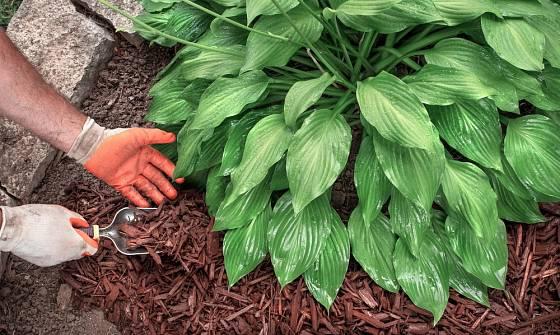 Pro vylepšení zahrady můžeme využít mulč