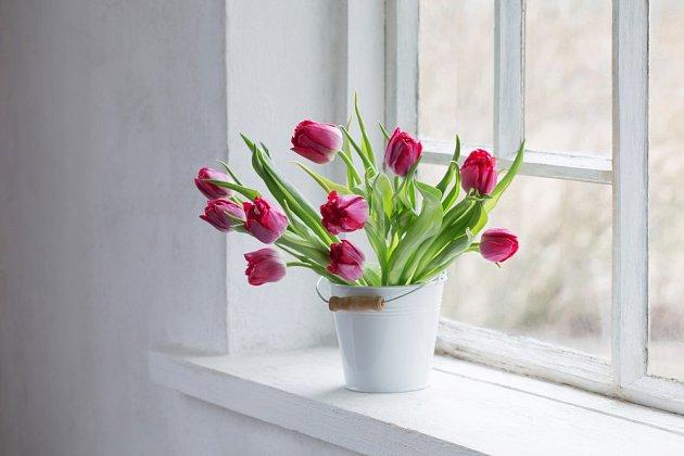 K nejoblíbenějším jarním květinám patří tulipány