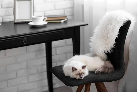 Kočky rády odpočívají na vyvýšených místech.