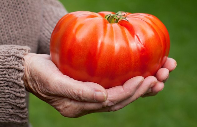 Obří rajče