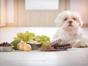Některé potraviny jsou pro psy nebezpečné nebo dokonce toxické