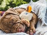 Co o vašem psovi prozradí pozice ve spánku?