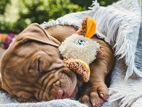 Co o vašem psovi prozradí poloha ve spánku?