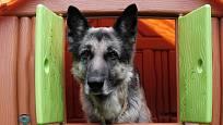 Někdy může nastat i problém. Ne každý pes chce být v boudě.