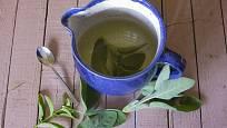 Šalvěj působí dezinfekčně - proto bolestem v krku i proti plísním na rostlinách