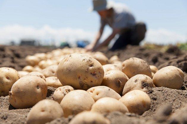 Správně připravená půda přinese bohatou sklizeň
