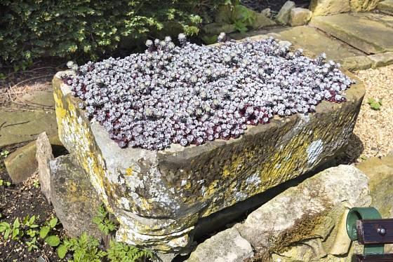 Patina dodá starým kamenným korytům zvláštní kouzlo.