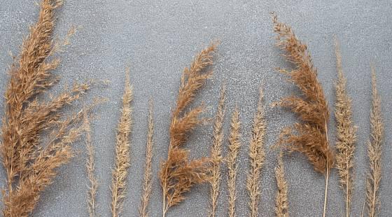 I suché květenství a plodenství trav pěkně doplní suché vazby